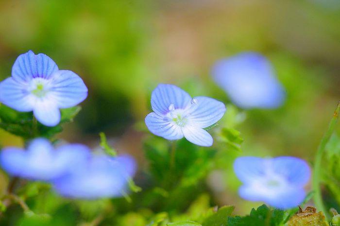 Colors Fleshyplants Flowers EyeEm Nature Lover Spring 春 Macro Nature Spring Colours Spring Time Flower Collection EyeEm Flower Blue Blue Flowers