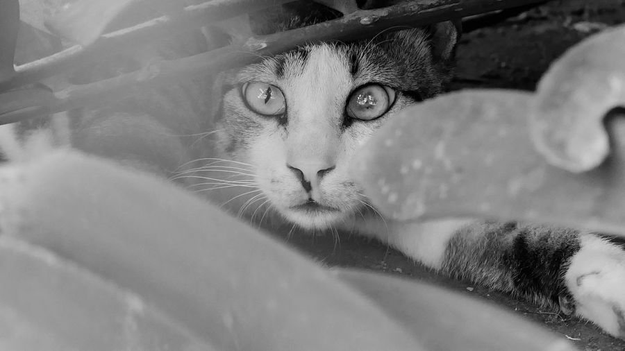 Outdoors Nature Portrait One Animal Cat Feline Pets Domestic Cat Domestic Looking At Camera Domestic Animals Close-up Headshot Animal Eye