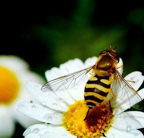 EyeEm Gallery EyeEm EyeEm Best Shots Eye4photography  Hello World Bysinaneksi Animal Animal Bee