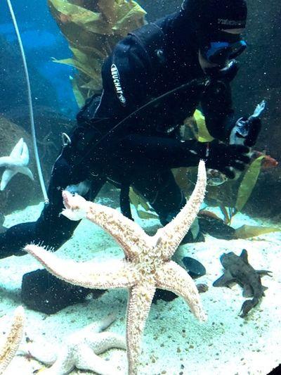 Oceanario Lisboa Fish Starfish  Feeding The Fish Aquarium Diver Fish & starfish lunch time!