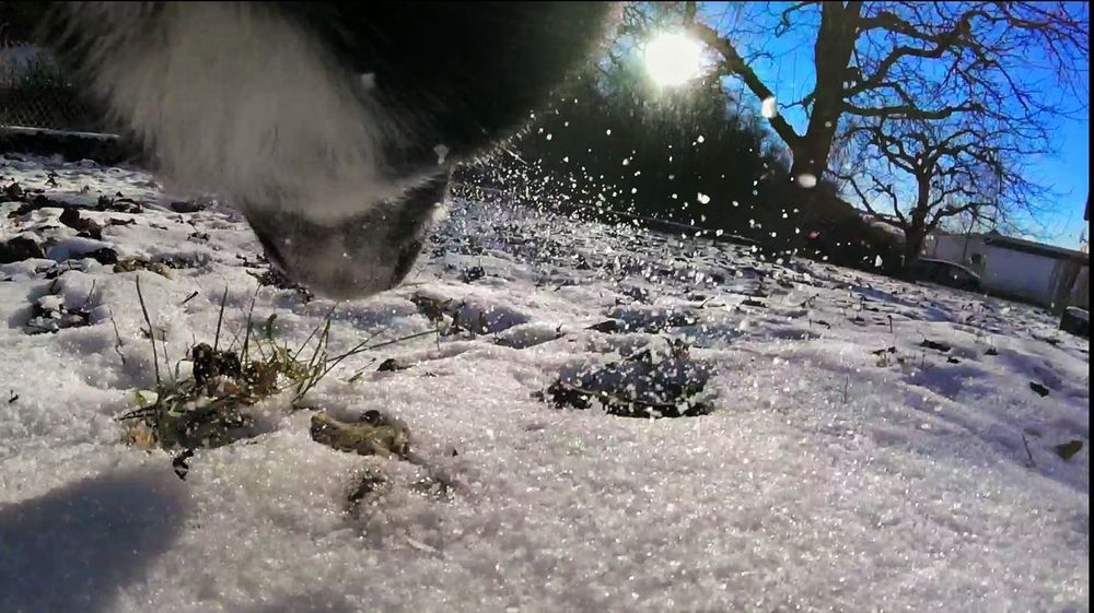 Snapseed Winter Wonderland Winter Sunshine Cold Goprophotography Goprooftheday Goprohero4 Dog Dogs Dogs Of EyeEm Dogslife Snow Gopro Session Gopro EyEmNewHere