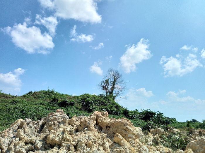 Plants growing on rocks against sky