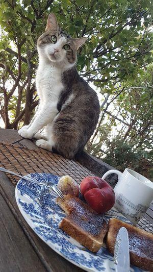Cat Greek Cat
