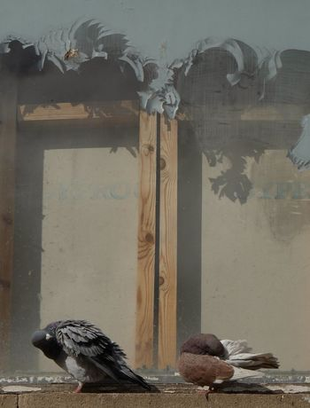 Pigeons Pealing Paint Window Decay And Dereliction Feathers