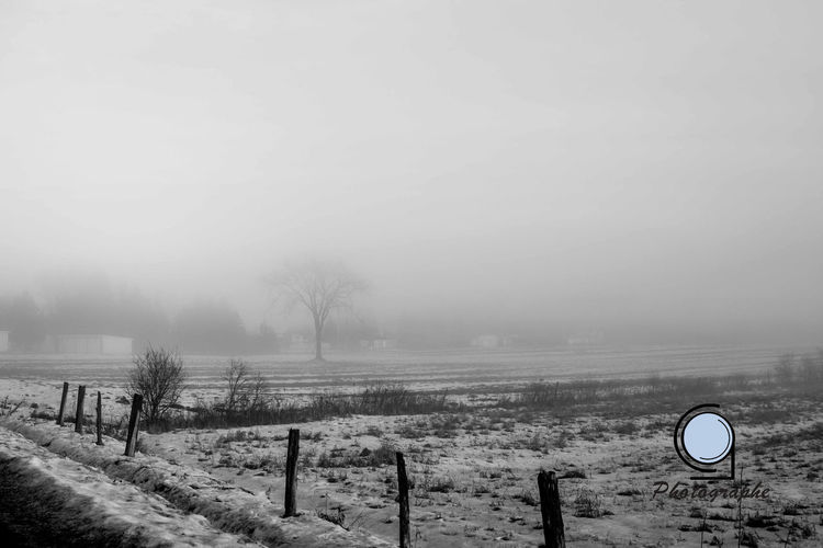 Beauty In Nature Cold Temperature Fog Foggy Tranquil Scene Tranquility Weather Winter