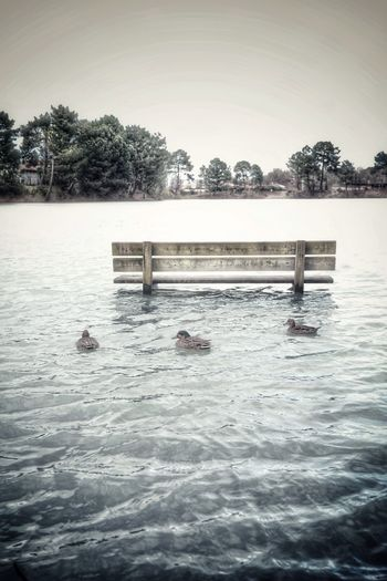Swimming pool in a lake