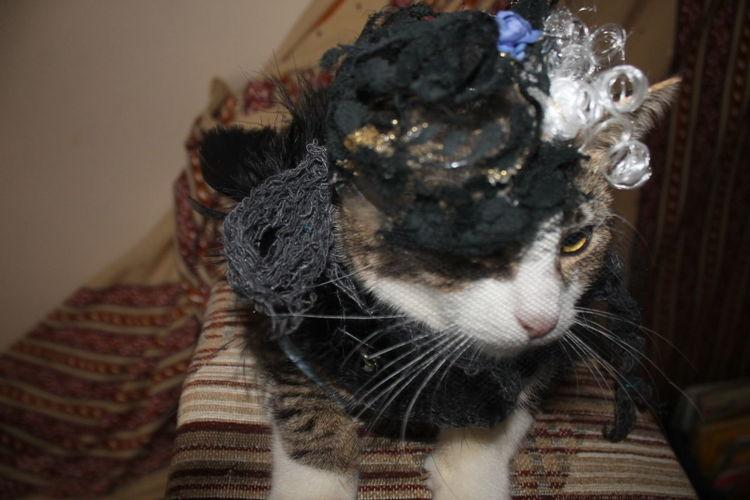 1950's Kitty Meow🐱 Costume Cute Diva Kitt Dressed To Impress Kitten Hat