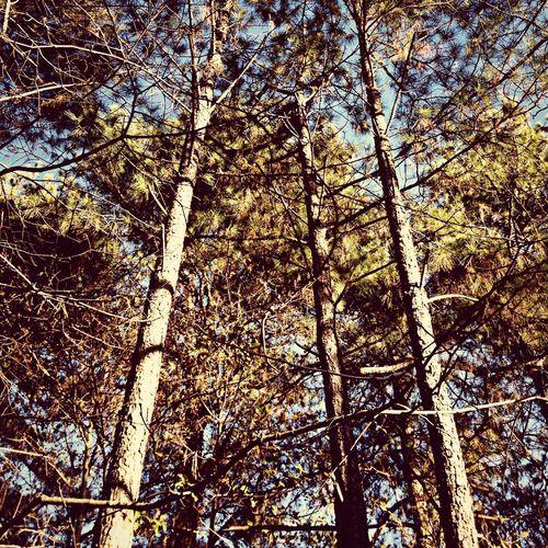 Trees Backyard