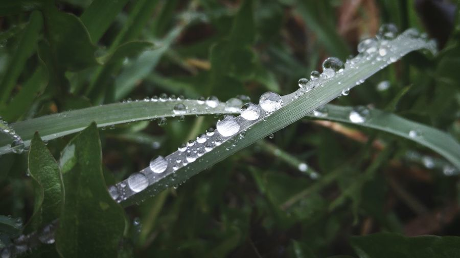 Nature Grass Dew Morning Dew Rain Morning Field Close Up Nature Still Life The EyeEm Collection Natures Diversities Miles Away