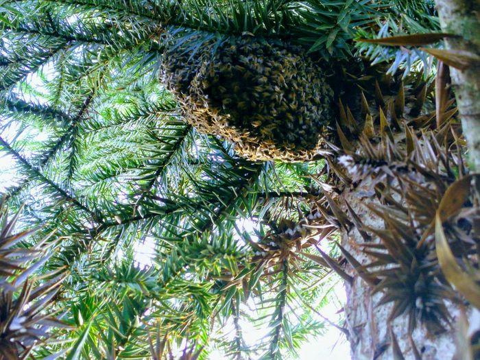 Bee 🐝 Tree