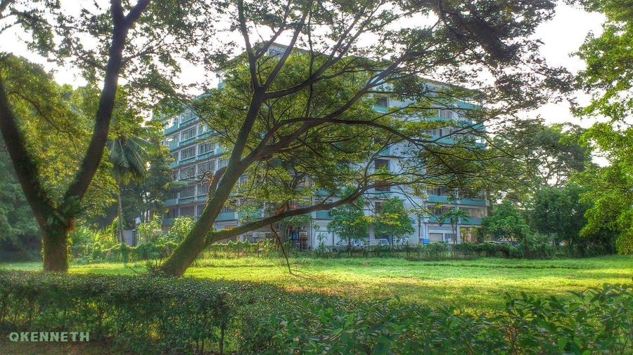 """Behind the building is known as """"Singapore Johor Factories"""" Hugging A Tree"""