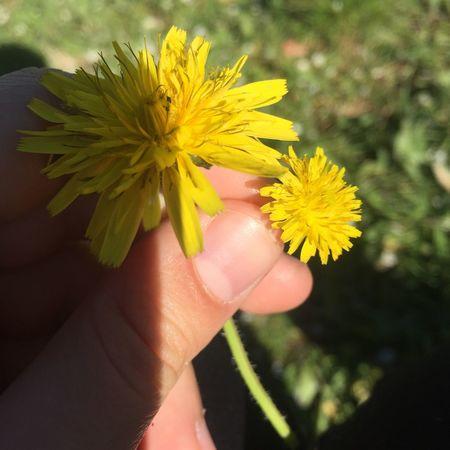 EyeEmNewHere Flowers Magic Beautiful Nature