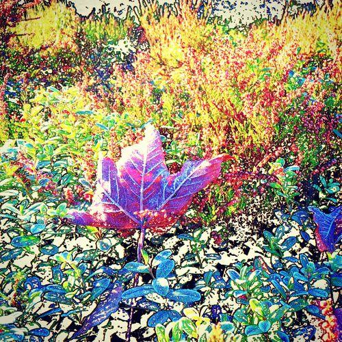 Frostige Heideland Multi Colored Heide Laub Heidelandschaft Herbststimmung