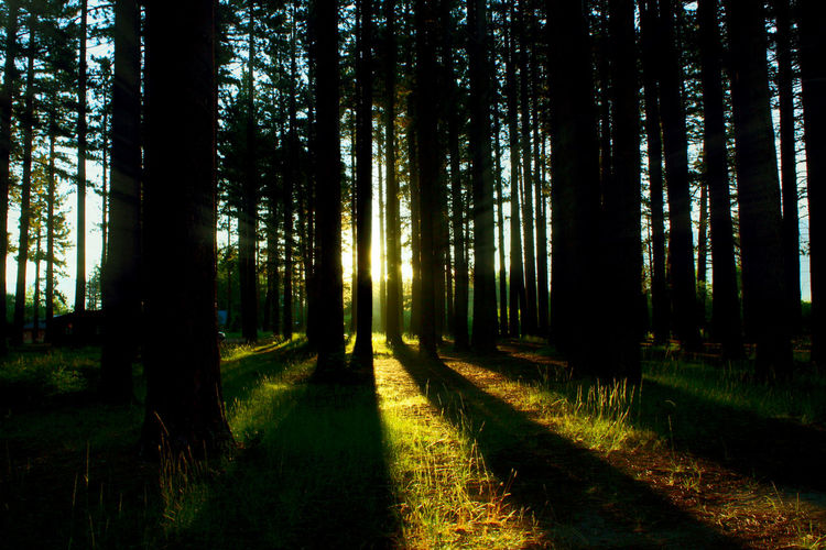 Beauty In Nature Day Forest Forrest Grass Green Color Nature Outdoors Shadow Shadows & Lights Sun Sunlight Tree
