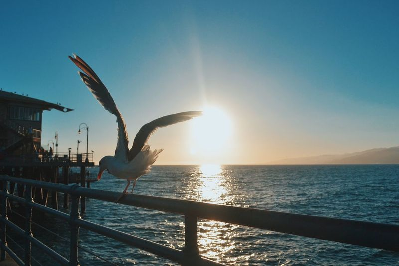 Seagull Perching On Railing Against Sea During Sunny Day