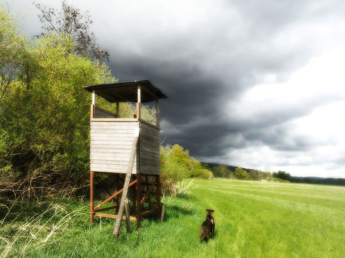April Weather Spring Photography Sunshine And Dark Clouds Storm Approaching Storm Is Coming Storm Clouds High Seat In The Foreground Hunting Dog Watching The Clouds Dog Dogs Of EyeEm Grassland Landscapes Nature Photography Nature Sky And Clouds Kinzig Meadowlands Kinzig Auen Tree Day Outdoors No People Live For The Story