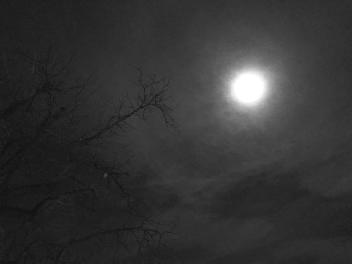 Moon Sun Bare Tree Beauty In Nature Nature Tranquility Scenics Low Angle View Moonlight Outdoors Branch No People Tree Sky Astronomy