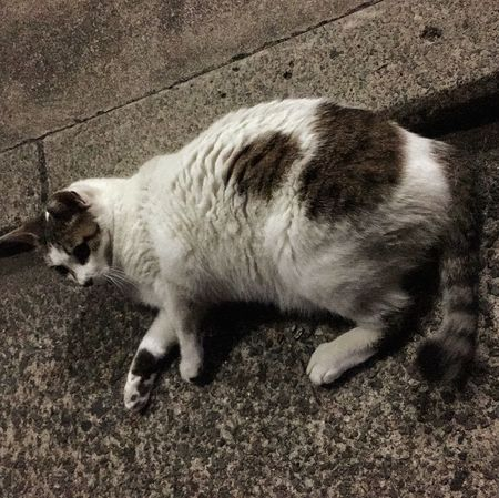 夜ねこ Stray Cat 野良猫