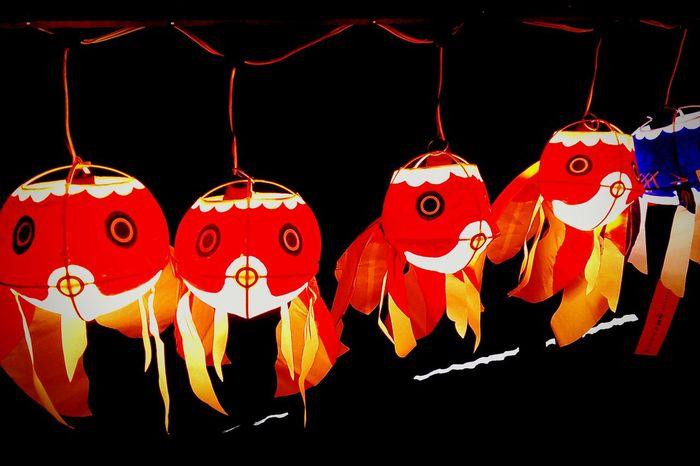 暗闇でとぼける金魚(笑) Hello World Tokyo,Japan Goldfish Meguro Japanese Style Light And Shadow ちょうちん