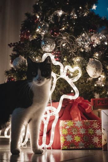 Cat on illuminated christmas tree