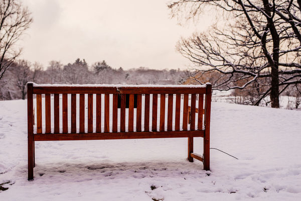 Bare Tree Bench Cold Temperature Day Nature No People Outdoors Sky Snow Tree Winter