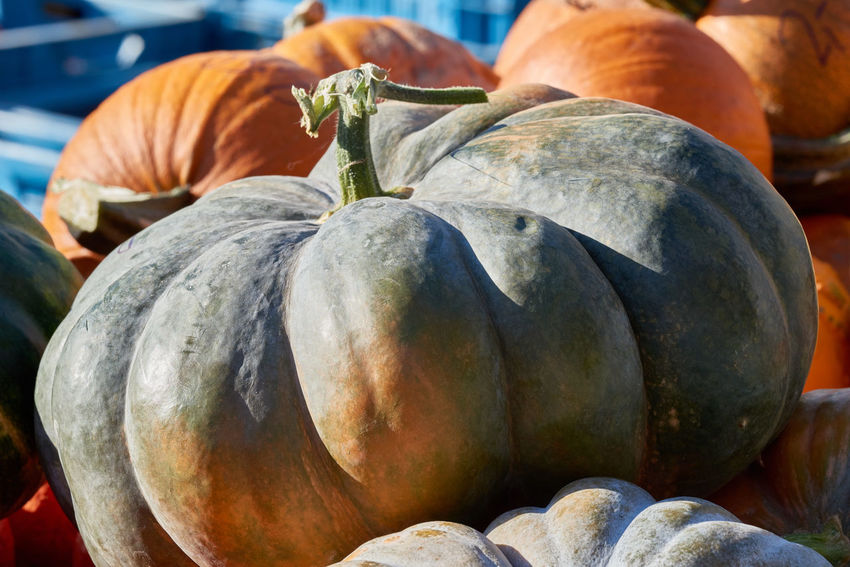 Green and orange pumkins on a local market offered for sale. Colorful Eatng First Eyeem Photo Freshness Green Color Healthy Local Landmark Low Carb Nature Nature_collection Orange Color Pumpkin RGanimals Vegetable