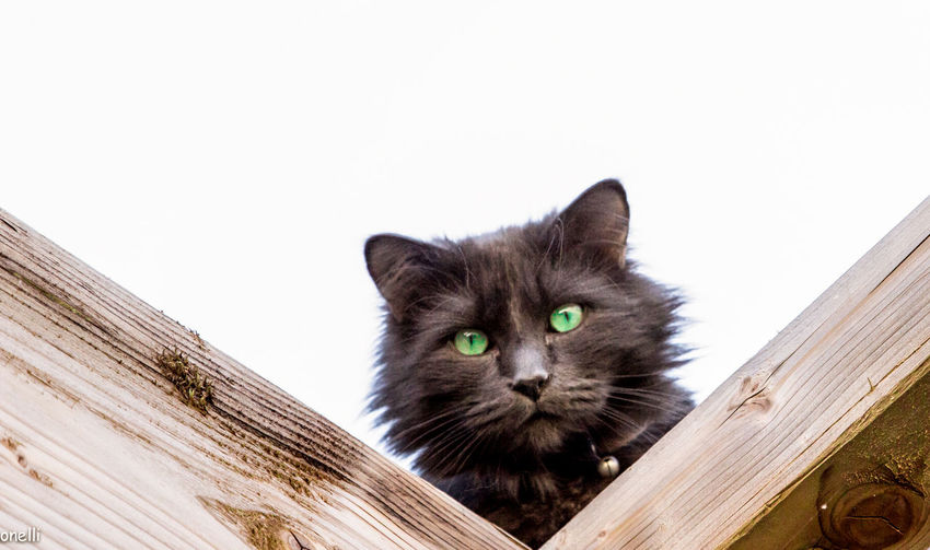 Black Cat Domestic Animals Domestic Cat Feline Green Eyes Headshot Looking At Camera Looking Down Outdoors Pets