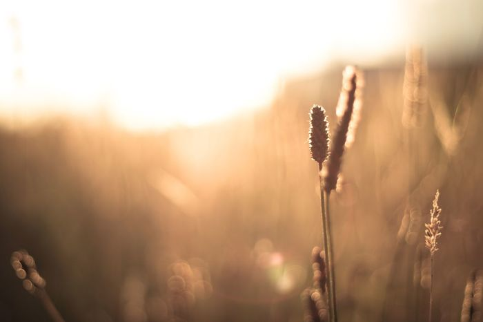 Golden Hour Growth Nature Plant Focus On Foreground Outdoors Beauty In Nature No People Close-up Day Freshness