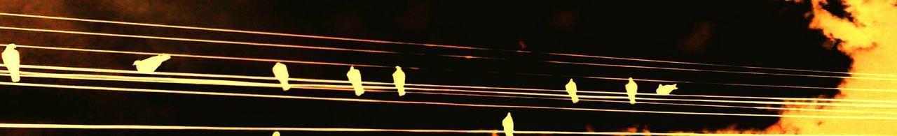 ArtWork Arte En Foco Artistic Eye Artistic Expression Pentagrama Musical La La Sol Solsol Fa Sol Sol La Pajaros