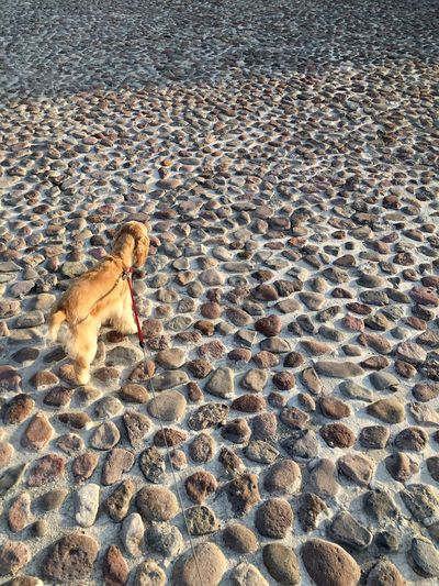 Sand Animal Themes Dog Outdoors Pets Day Mammal No People One Animal Beach Domestic Animals Backgrounds Rocks Nature EyeEmNewHere
