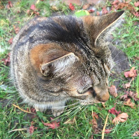 Urbancatphotography Curiosity Lunathecat IPhone Feline Catbliss Catportrait Cat Autumn Urbancat
