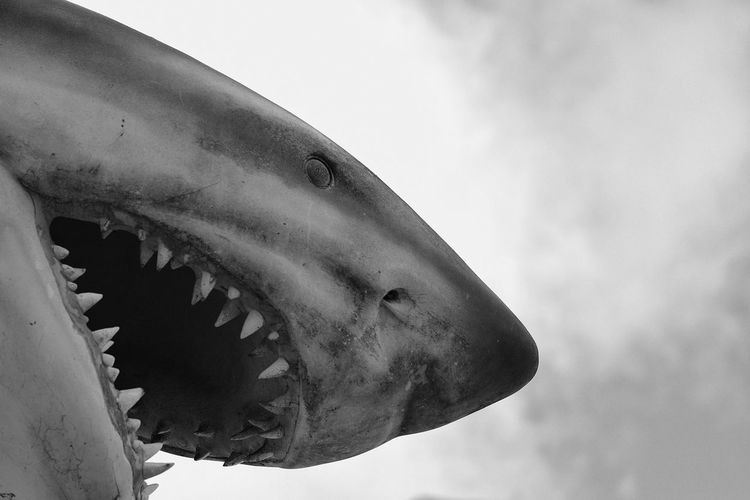 Low angle view of shark against sky