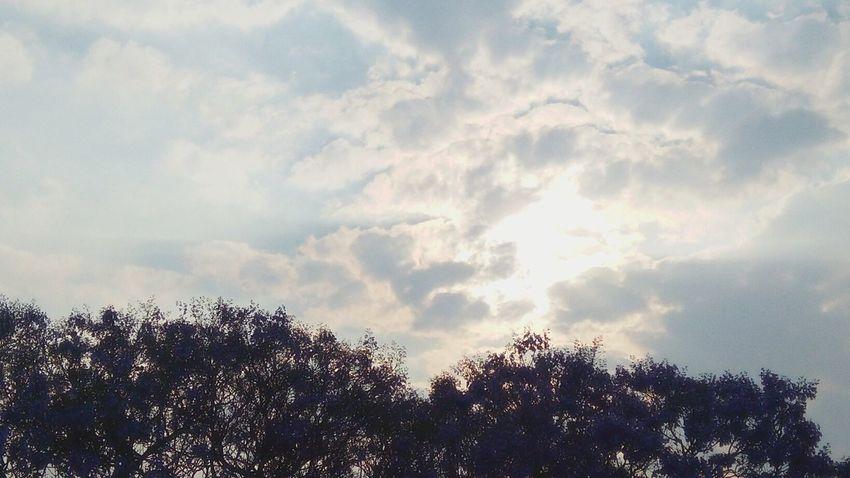 Low Angle View Leafs Trees And Sky Trees Sun Sunset Sunlight Sun ☀ Sun And Clouds Trees And Sunset Trees And Sun Golden Hour Golden Light Golden Sunset Trees Collection Sun_collection Jacarandas En Flor Jacarandatree Jacaranda Petals Purple Flowers