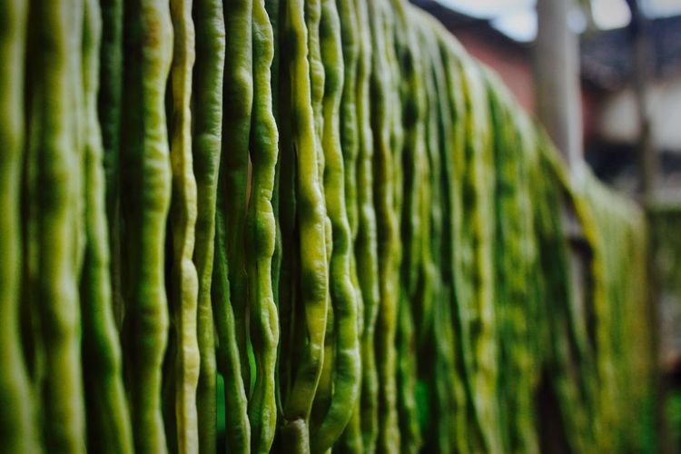 Green Beans Lang Beans Countryside Country Life Chinese Village Green Food Acid Beans