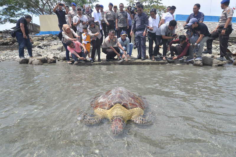 Indonesian release Sea Turtle_ Beach Crowd Day Group Of People Large Group Of People Leisure Activity Lifestyles Marine Men Nature Outdoors Real People Sea Swimming Water Waterfront Women