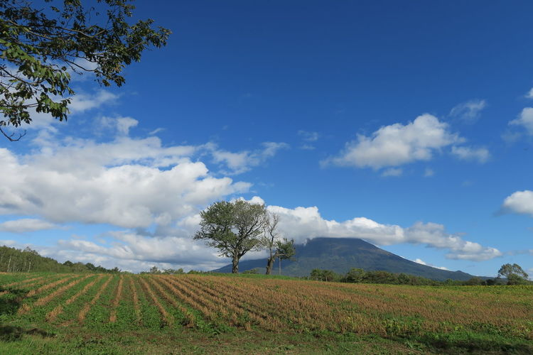 autumn niseko hokkaido japan 2018 In One Photograph It's About The Journey Moments Of Happiness Capture Tomorrow Architecture Tree Grass Mountain Hokkaido Cloud And Sky Niseko Yotei Autumn Mood EyeEmNewHere Yotei Mt., Hokkaido Yotei Mt. Holiday Moments A New Perspective On Life Sky Landscape Land Field Cloud - Sky Plant Environment Scenics - Nature Beauty In Nature Tranquil Scene Growth Tranquility Agriculture Rural Scene Nature Day Farm No People Non-urban Scene Outdoors Plantation