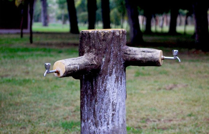 Close-up of wooden post in park