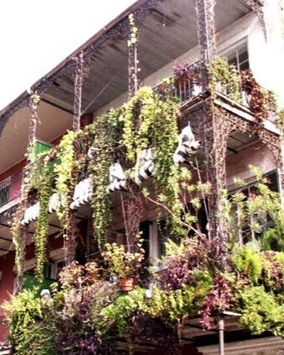 Balcony over burbon Plant Tree Built Structure Growth Building Exterior Architecture Nature Leaf Agriculture Green Color Low Angle View Flower Outdoors No People Ivy Day Sky Burbon Street The Architect - 2017 EyeEm Awards