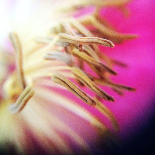 Macro Flower Prink Pink Bright
