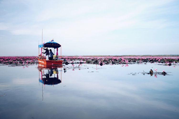 Lotus Udonthani Thailand Sea Lotus Flower Traveler Nature Relaxing Holiday