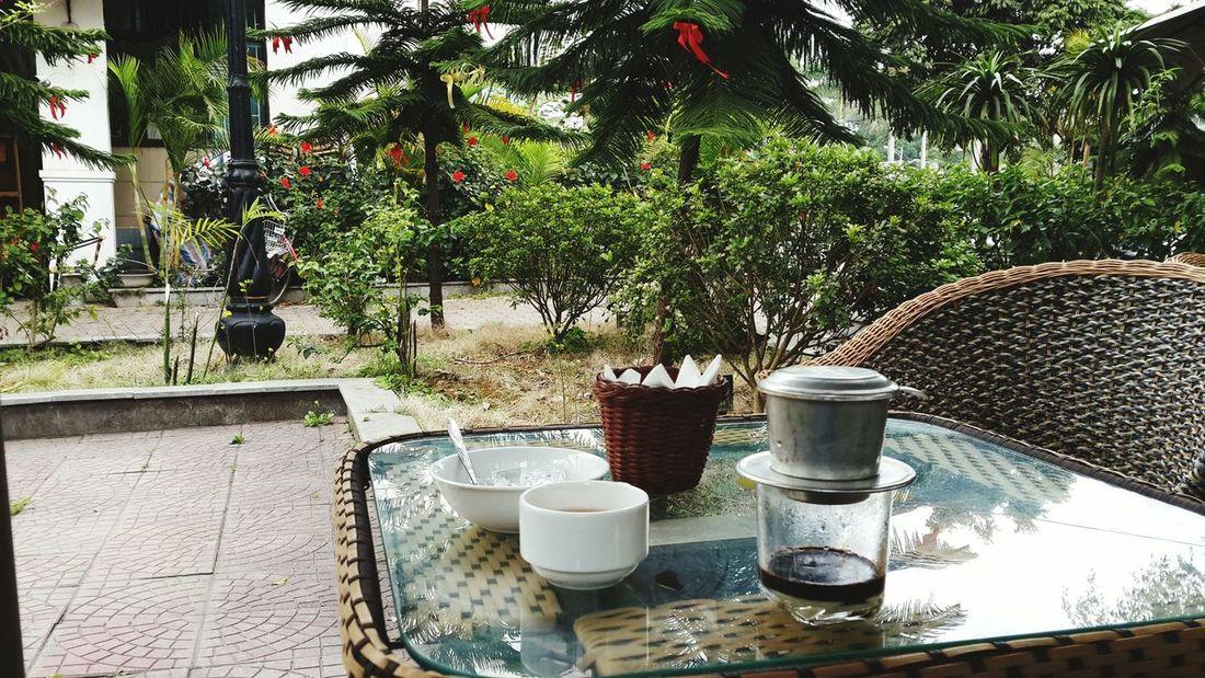 Coffee vườn Lạng Sơn