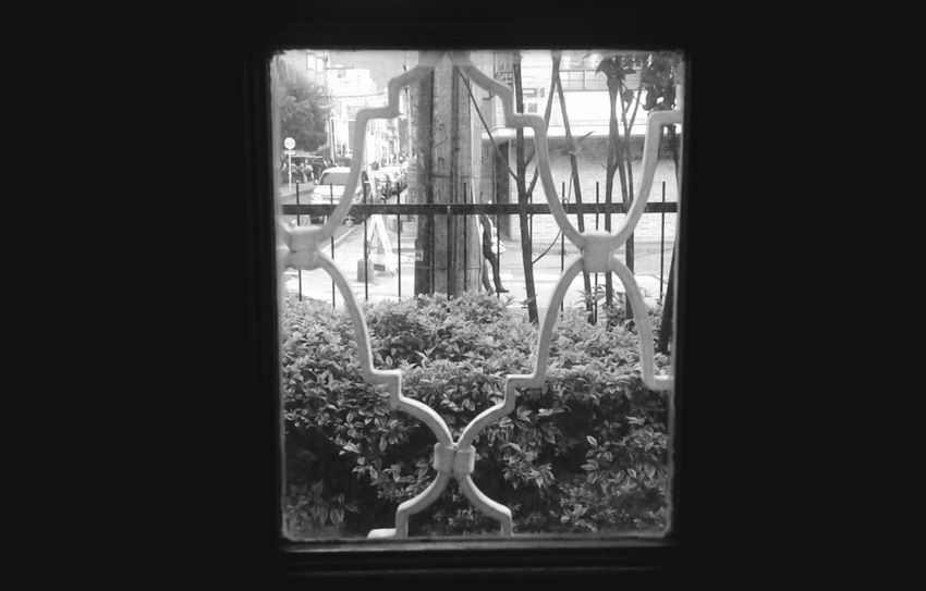 Window No People Plant Tree Indoors  Day
