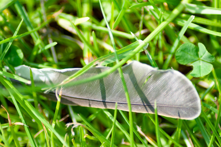 Animal Animal Themes Animal Wildlife Animal Wing Blade Of Grass Butterfly - Insect Close-up Day Feather  Field Fragility Grass Green Color Growth Invertebrate Land Leaf Lightweight Nature No People Outdoors Plant Plant Part Softness Vulnerability