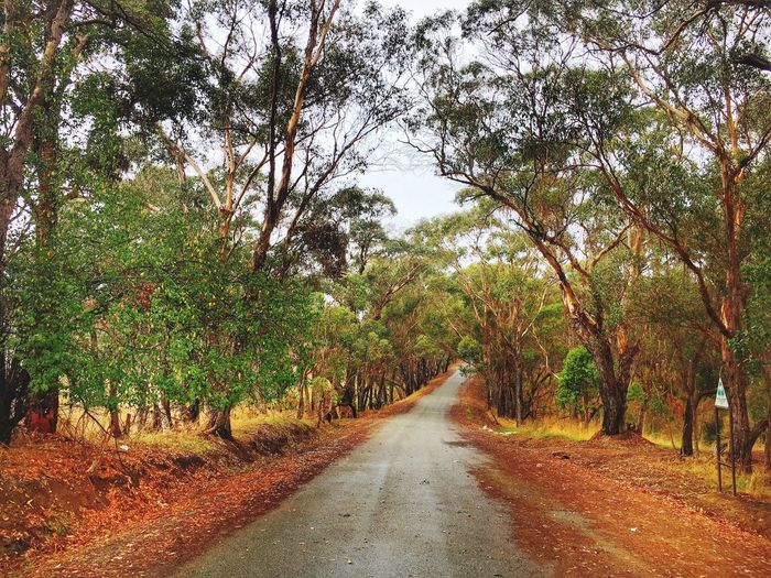 Outdoors Scenics Tree The Way Forward Nature Growth Day Road Beauty In Nature No People Tranquility Tranquil Scene Landscape Forest Branch Albany Australia Iphone6splus