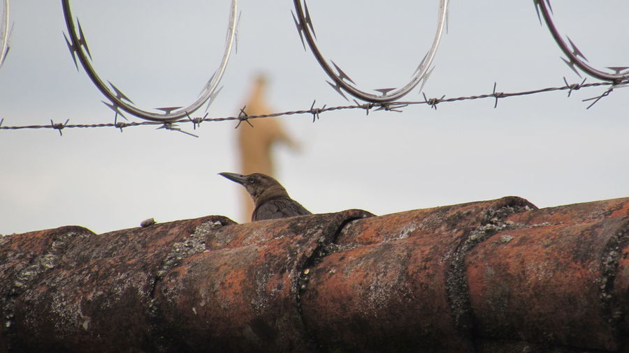 Close-up of fence against bird
