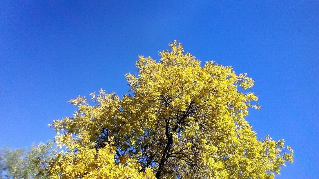 Blue Tree Nature Sky Clear Sky Low Angle View Branch Beauty In Nature No People Day Outdoors Contrast Bold Centered