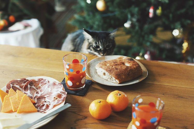 Pets Domestic Cat Ready-to-eat Tabby Cat Healthy Eating Food Day First Eyeem Photo