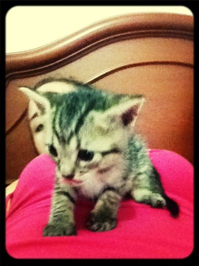 My Little Cat☺