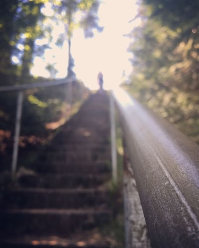 #EyeEmNewHere #EyeEm Best Shots #eyeemoftheweek Tree Nature One Person Sunlight Day Plant Transportation Walking Staircase Direction The Way Forward Unrecognizable Person Architecture Real People Outdoors Railing Lifestyles Lens Flare Sunbeam