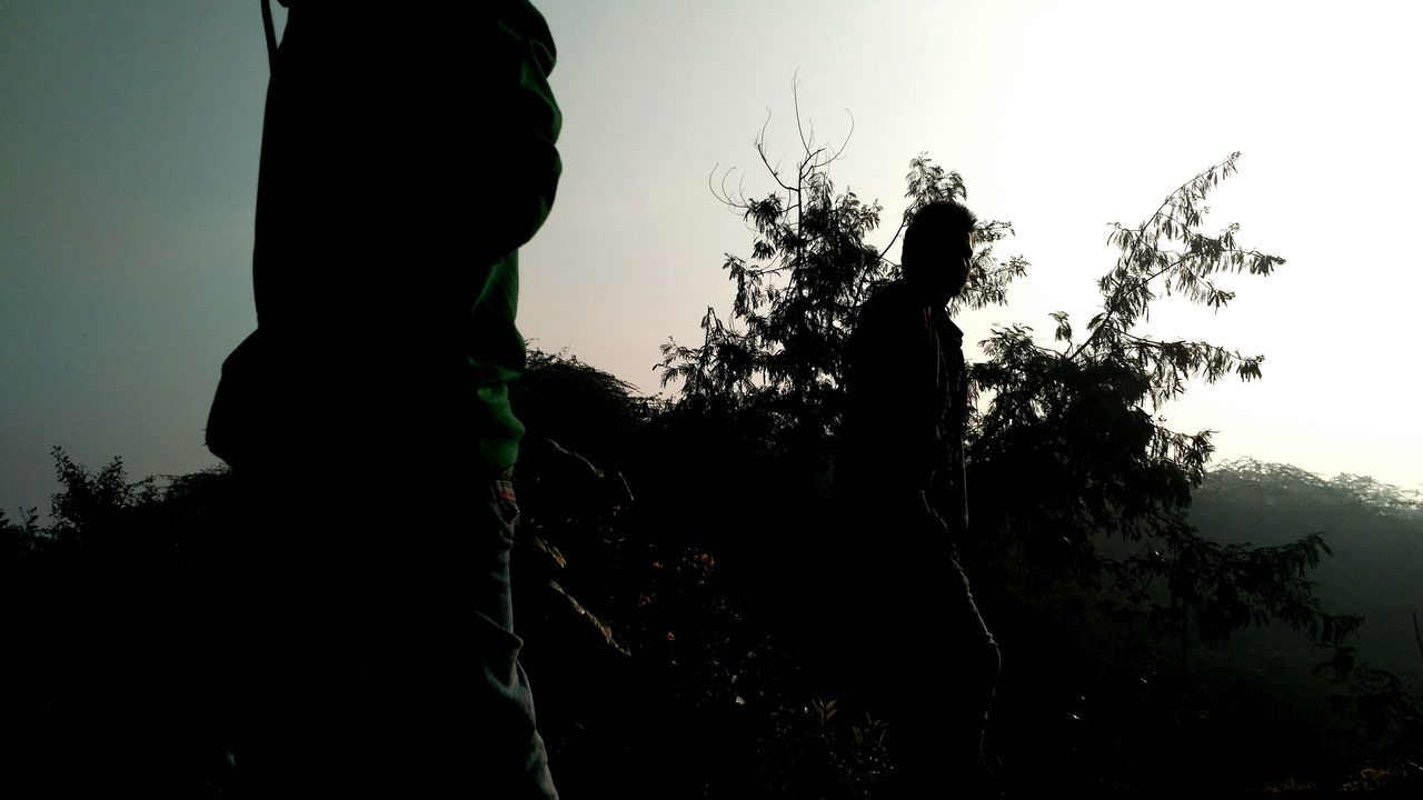 tree, growth, nature, plant, sky, low angle view, statue, silhouette, tranquility, outdoors, clear sky, no people, beauty in nature, day, scenics, branch, close-up